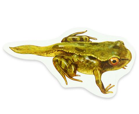 Lebenszyklus Frosch magnetisch-4