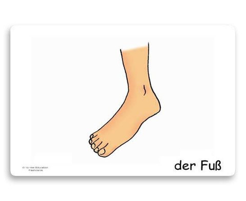 Bildkarten Koerperteile-5