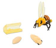 Lebenszyklus Honigbiene, 4 Figuren