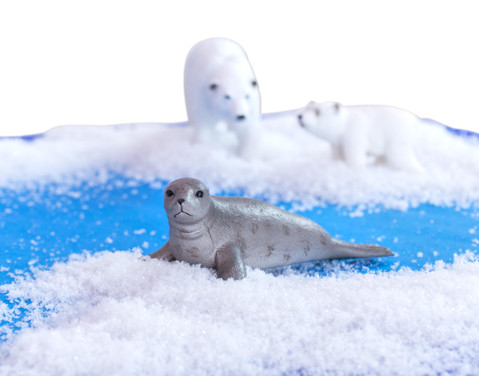 Arktische Tiere 6-tlg Set-2