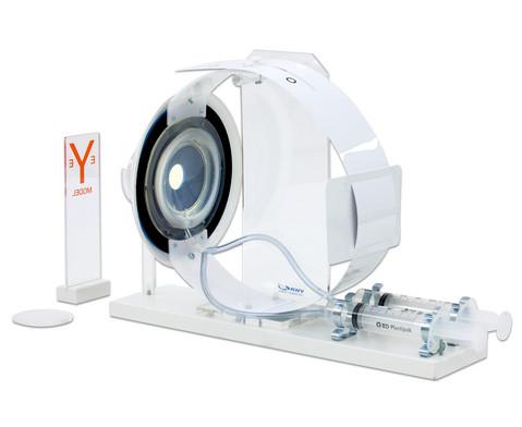 Funktionsmodell des Auges-4