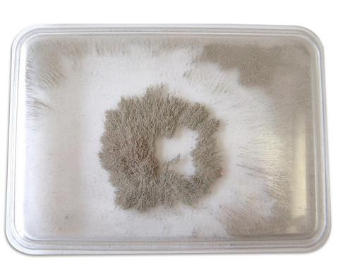 Eisenpulver-Box
