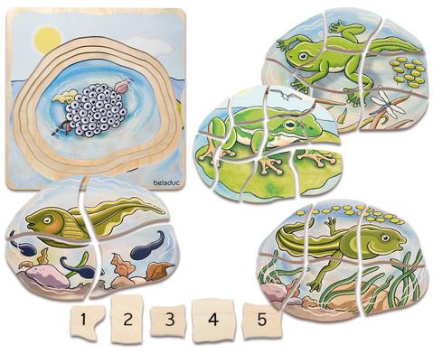 Lagen-Puzzle Frosch