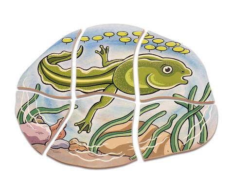 Lagen-Puzzle Frosch-2