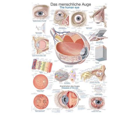 Lehrtafel menschliches Auge-1