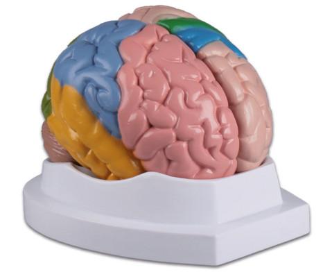 Menschliches Gehirn-1