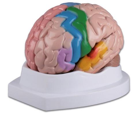 Menschliches Gehirn-2