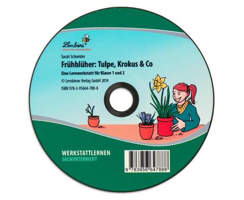 Lernwerkstatt Fruehblueher Tulpen Krokus  Co-7