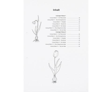 Lernwerkstatt Fruehblueher Tulpen Krokus  Co-14