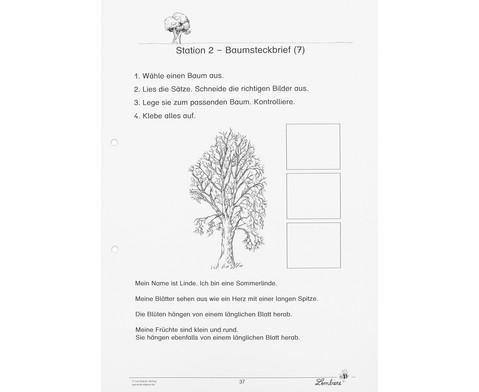Lernwerkstatt Unsere Laubbaeume-8