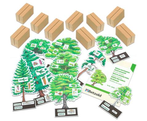 Baeume bestimmen leicht gemacht mit Holzaufstellern