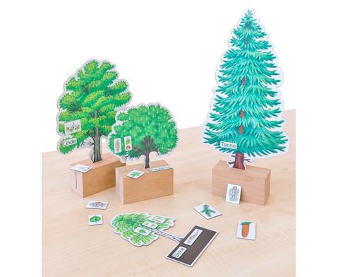 Baeume bestimmen leicht gemacht mit Holzaufstellern-3