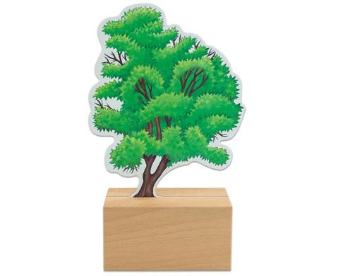 Baeume bestimmen leicht gemacht mit Holzaufstellern-6