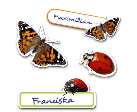 Schmetterlinge zuechten-2