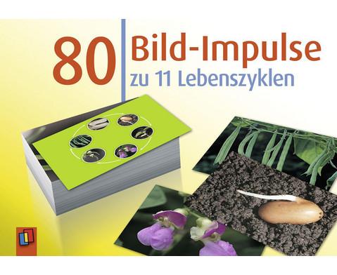 Bildkarten 80 Bild-Impulse zu 11 Lebenszyklen