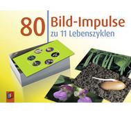 Bildkarten: 80 Bild-Impulse zu 11 Lebenszyklen
