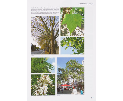 Buch Pflanzen und Tiere in der Stadt-2
