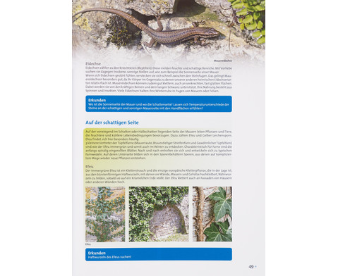 Buch Pflanzen und Tiere in der Stadt-4