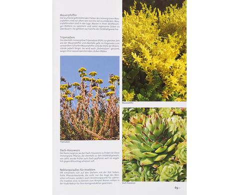 Buch Pflanzen und Tiere in der Stadt-5