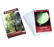 Naturquartett - Heimische Laubbäume