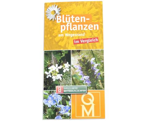 Bestimmungskarten - Bluetenpflanzen am Wegesrand 10 Stueck