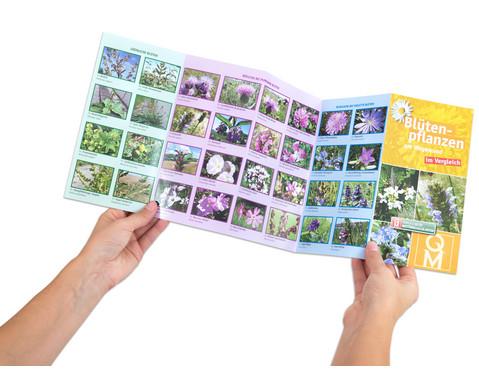 Bestimmungskarten - Bluetenpflanzen am Wegesrand 10 Stueck-2