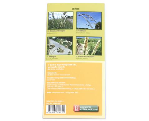 Bestimmungskarten - Bluetenpflanzen am Wegesrand 10 Stueck-3