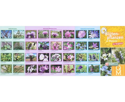 Bestimmungskarten - Bluetenpflanzen am Wegesrand 10 Stueck-4