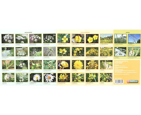 Bestimmungskarten - Bluetenpflanzen am Wegesrand 10 Stueck-5