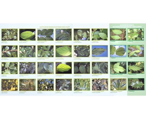 Bestimmungskarten - Blaetter heimischer Laubstraeucher 10 Stueck-4