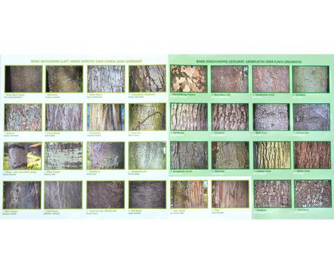 Bestimmungskarten - Rinden heimischer Laub- und Nadelbaeume 10 Stueck-2