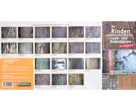 Bestimmungskarten - Rinden heimischer Laub- und Nadelbaeume 10 Stueck-3