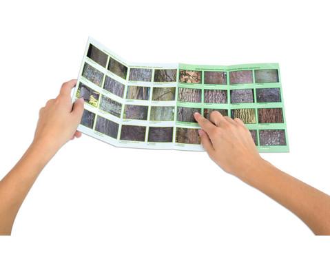 Bestimmungskarten - Rinden heimischer Laub- und Nadelbaeume 10 Stueck-5