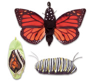Metamorphose Schmetterling