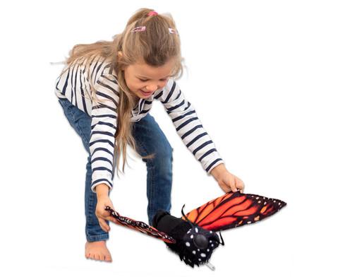 Metamorphose Schmetterling-4