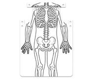 Skelett-Schürze zum Selbstgestalten