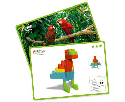 Poly-M Kartenset-1