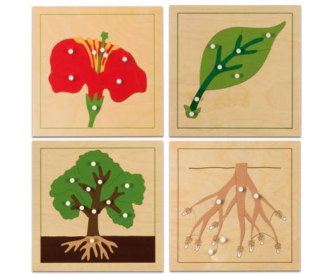 Botanisches Puzzle