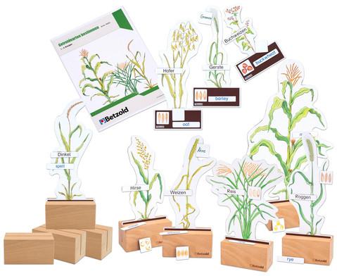 Sparset Getreide bestimmen